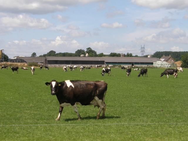 Nieuwe agrarische vakbeurs naar Biddinghuizen